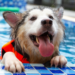 Thumbnail for Keeping your Pets Water Safe this Summer